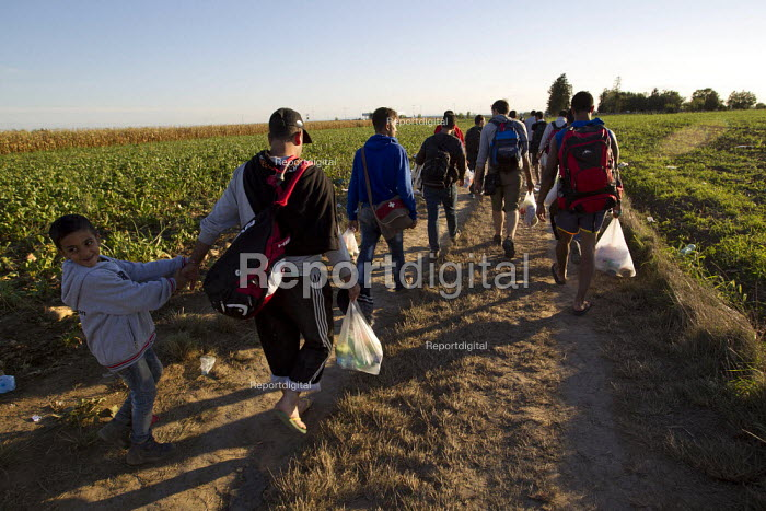 Refugees run through corn fields towards the Tovarnik, Croatia border crossing. Serbia. - Jess Hurd - 2015-09-21