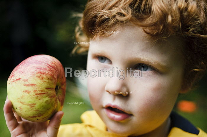 Young boy holding a Cox's apple. - Paul Carter - 2008-10-04
