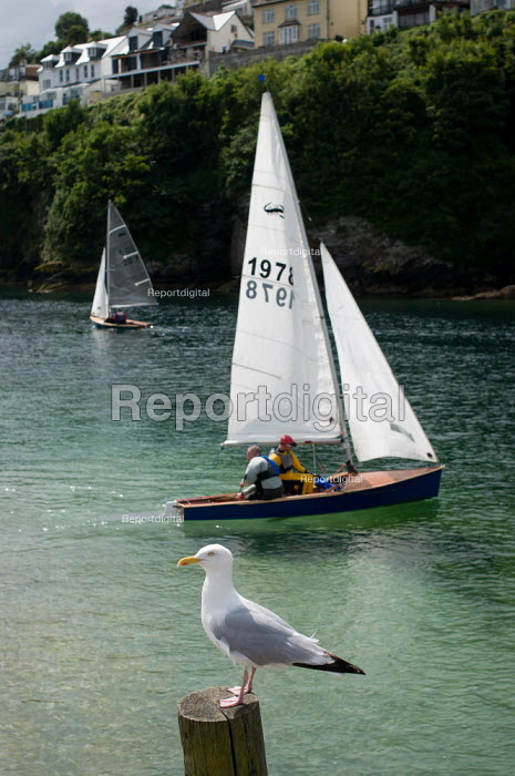 Seagull with sailing boats in the harbour behind. �Looe, Cornwall, UK - Paul Carter - 2010-08-04