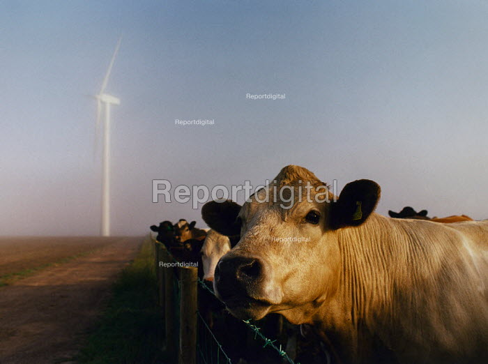 Cows with a wind turbines in the background. Cumbria. - Paul Carter - 2000-07-17