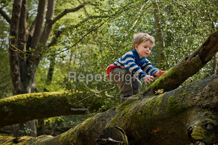 A young boy on a walk in Anses Wood, The New Forest. - Paul Carter - 2011-04-24