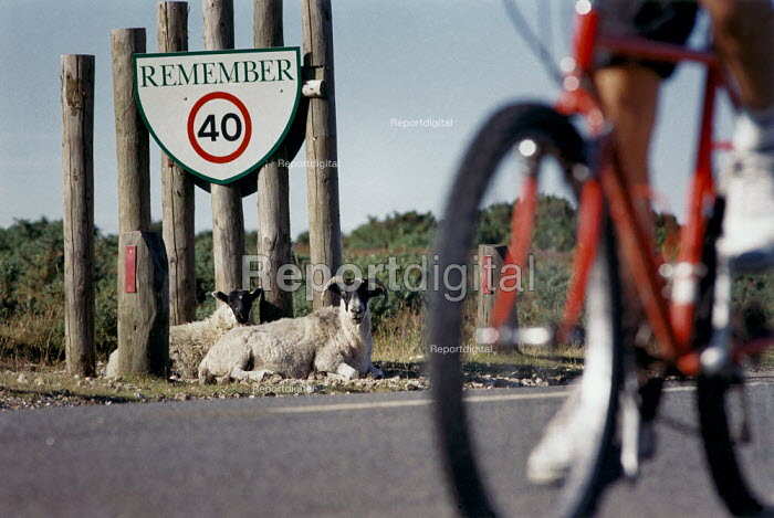 Bicycle passes sheep lying by the roadside, under a traffic sign. - Paul Carter - 1994-07-09