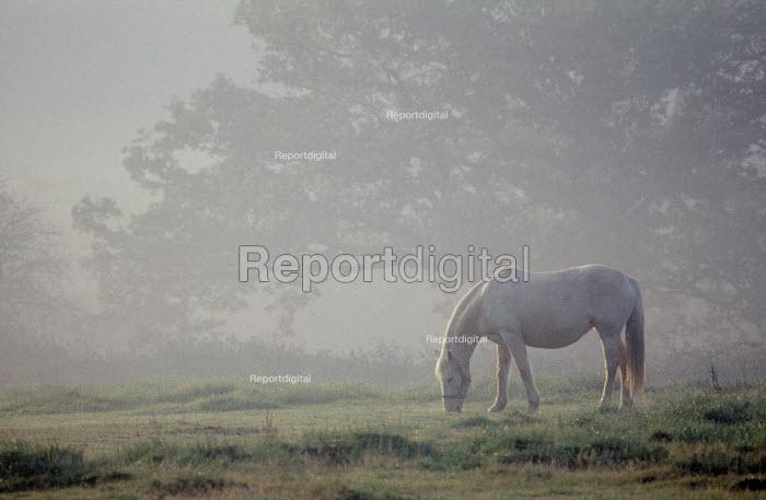 Pony grazing in a field on a misty morning. - Paul Carter - 1988-03-02