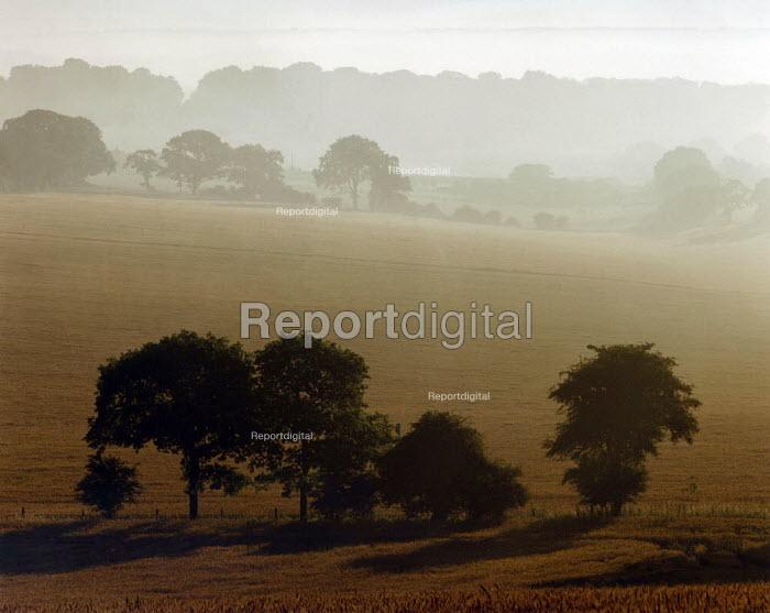 Trees surrounding a field, taken at dawn. - Paul Carter - 1995-07-18