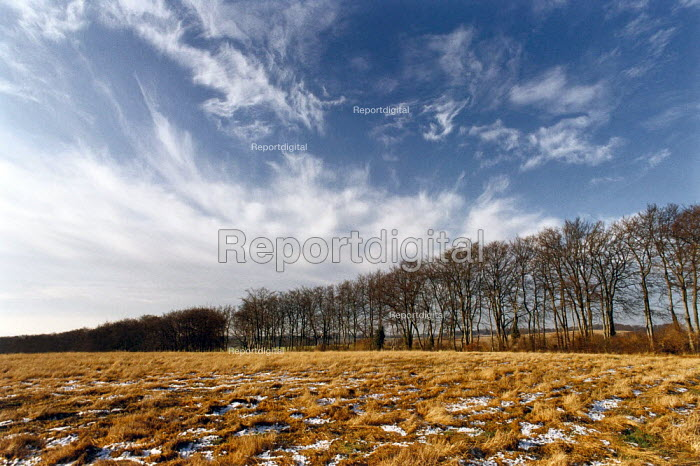 An avenue of bare trees surrounding a frost covered field. - Paul Carter - 1993-12-20