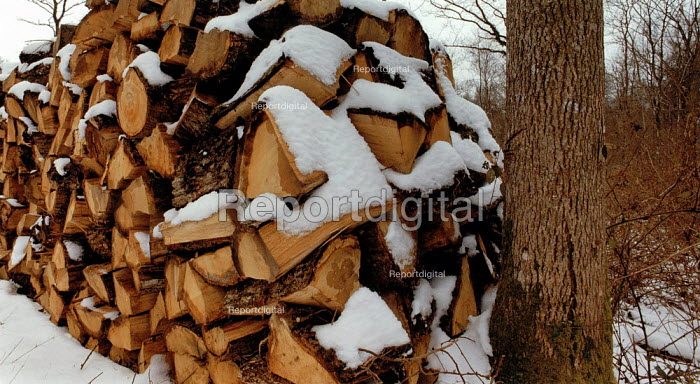 A pile of chopped logs covered with snow in the New Forest. - Paul Carter - 1994-02-16