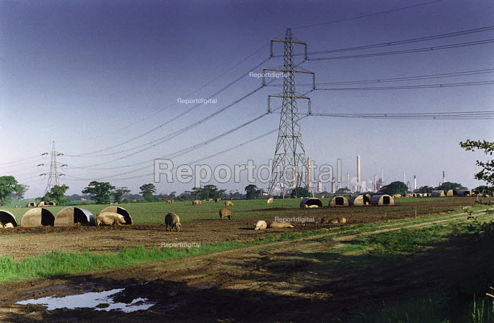 Free range pigs on farmland underneath electricity pylons with an oil refinery in the background. - Paul Carter - 1994-05-31