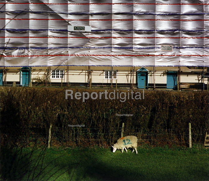 Sheep grazing near a hedge. In the distance the wind blows a pattern on the cladding of a scaffolding structure protecting some old houses being renovated. - Paul Carter - 1995-04-01