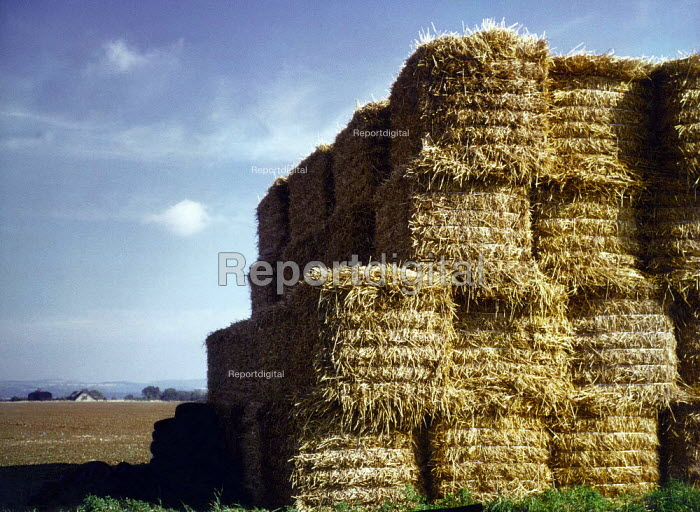 Bales of straw. - Paul Carter - 1999-08-25