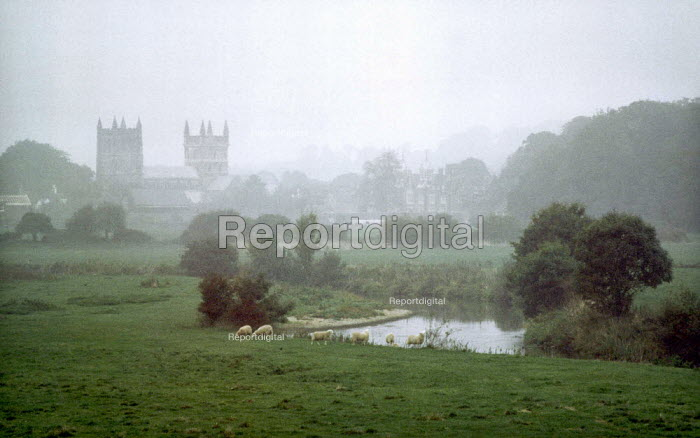 Sheep grazing in a pasture next to the River Stour with church bell towers in Wimbourne Minster, Dorset in the background. - Paul Carter - 2001-10-10