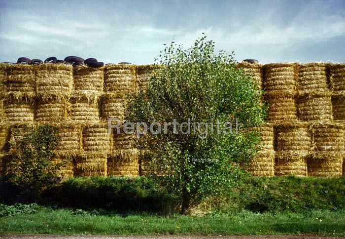 Bales of straw. - Paul Carter - 1999-08-25