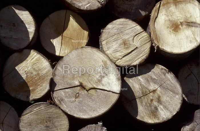 Pile of logs. - Paul Carter - 1989-03-10