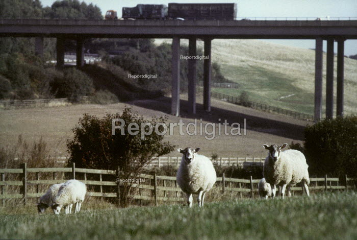 Sheep grazing in a field, near to a motorway. - Paul Carter - 1999-04-28