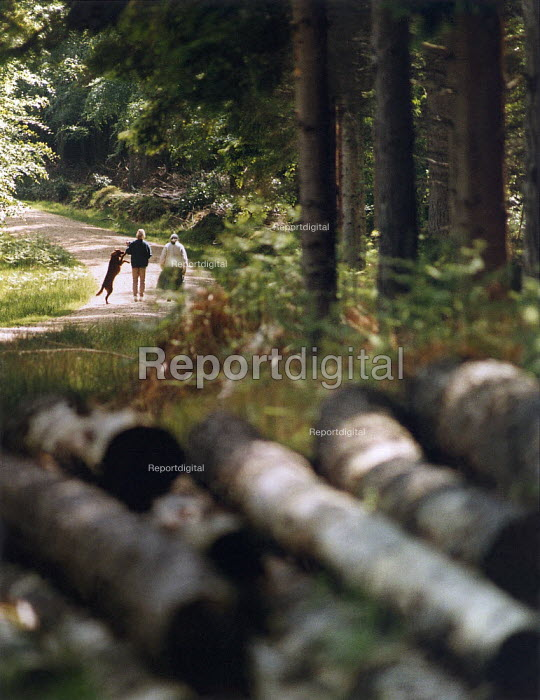 Two women walking a dog in The New Forest. - Paul Carter - 1994-05-24