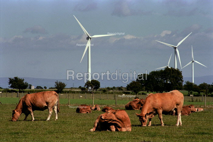 Windmills on farmland, Cumbria. Cows are grazing in a field next to them.This wind farm generates enough power for 2,000 homes, saving 8,530 tonnes of Greenhouse gases a year. - Paul Carter - 2000-07-17