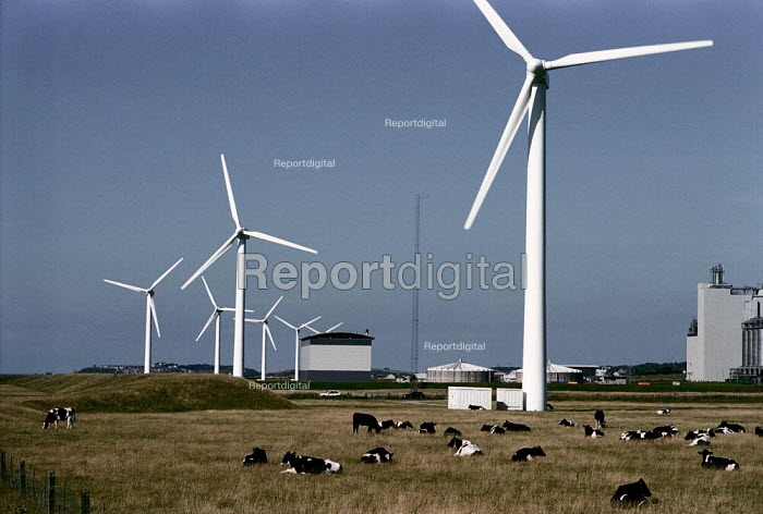 Windmills on farmland with cows sitting underneath, Cumbria.