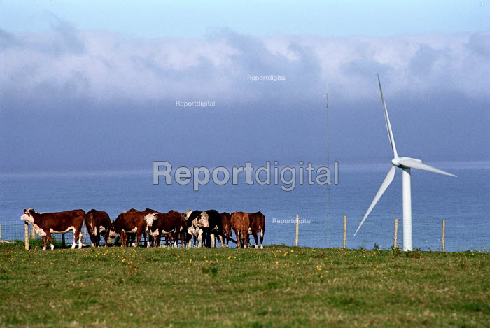 Livestock grazing in a field next to a windmill. Looking out to sea. Cumbria.This windfarm supplies 3,800 homes and saves 15,225 tonnes of greenhouse gasses a year. - Paul Carter - 2000-07-17