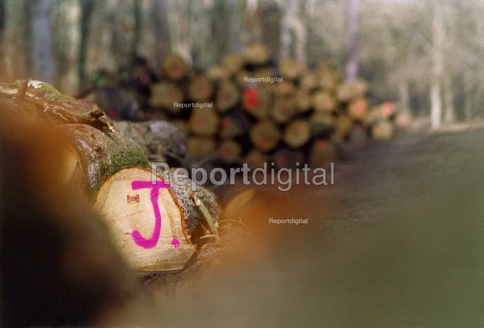 Log pile, The New Forest. - Paul Carter - 1998-02-22