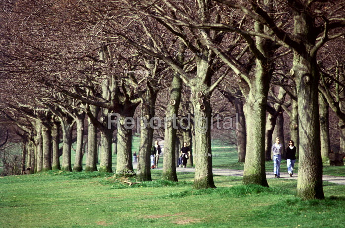 Families strolling through a park, along a tree lined path. - Paul Carter - 2001-10-16