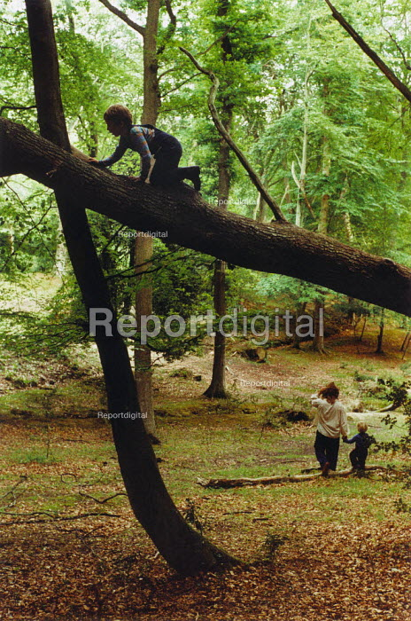 Young boy climbing along a tree, The New Forest. - Paul Carter - 1999-09-19
