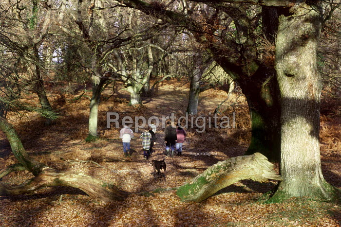 Family walking through The New Forest. - Paul Carter - 1989-09-01