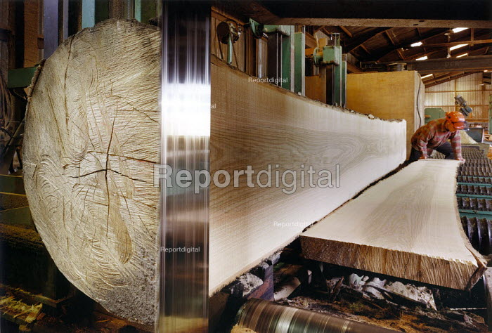 Sawing an ash log in a timber mill. - Paul Carter - 1995-07-17