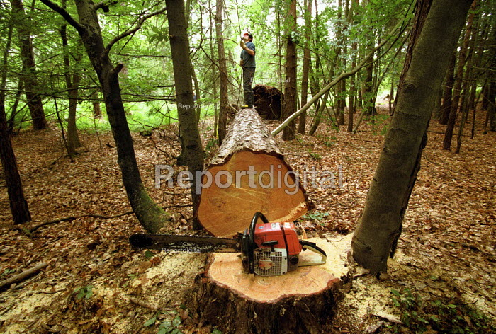 Forestry worker standing on a felled Dougals Fir tree, The New Forest. - Paul Carter - 1995-07-18