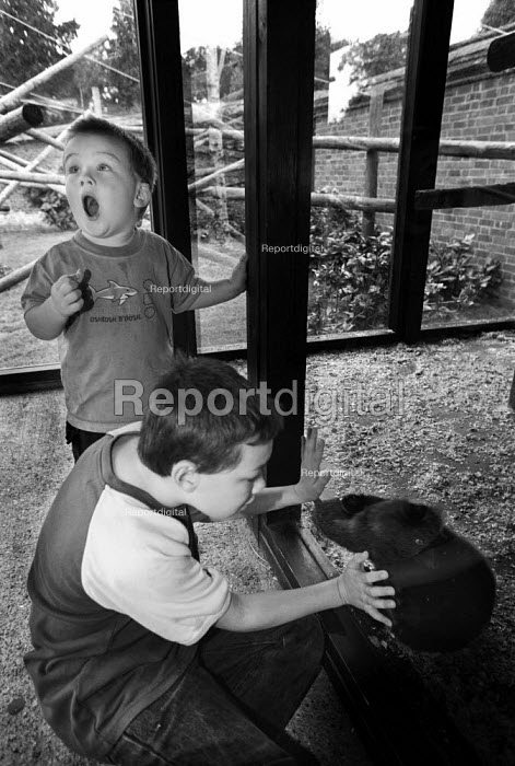 Two young boys on a trip to a zoo. They are looking through glass at an animal. - Paul Carter - 2001-09-13