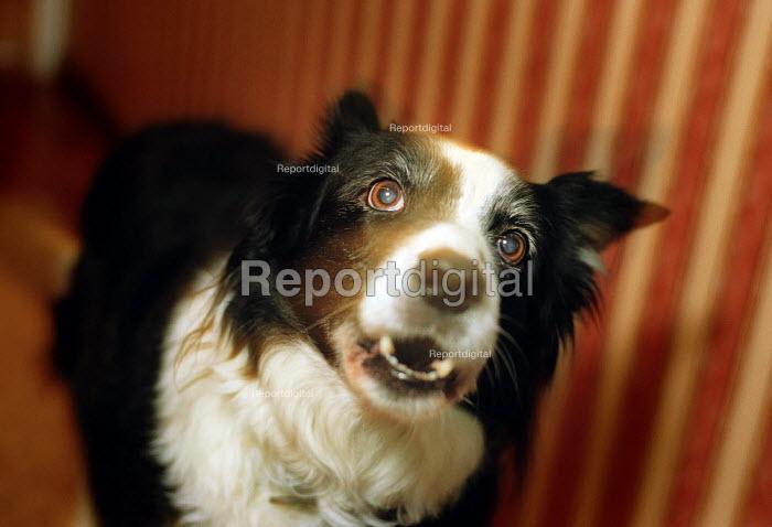Dog barking. - Paul Carter - 2003-01-15