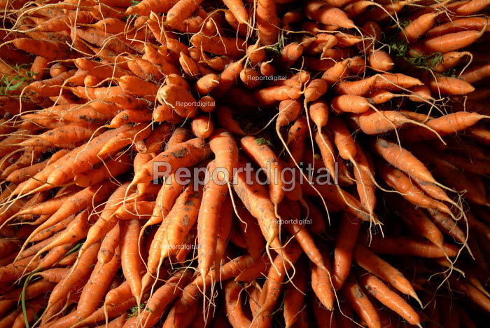 A big bunch of organic carrots ready for sale at a local farmers market. Sales of organic carrots have increased by 30 to 40% after OP residue worry, according to sources at the Soil Association. - Paul Carter - 2003-08-16