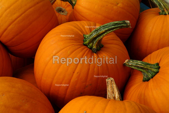 Harvested pumpkins. - Paul Carter - 2003-09-02
