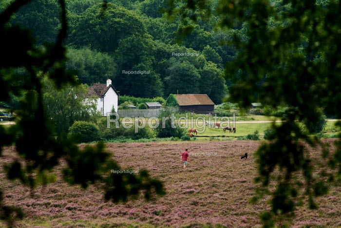 Man walking his dog across the heather to Holly Hatch Cottage, The New Forest, Hampshire - Paul Carter - 2003-08-17