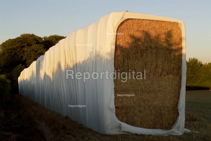 Straw bales stored in a plastic wrapper on the edge of field. Hampshire, UK. - Paul Carter - 2003-07-09