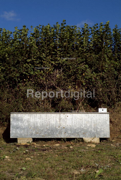 Bright stainless steel water trough next to a hedge. - Paul Carter - 2003-05-10