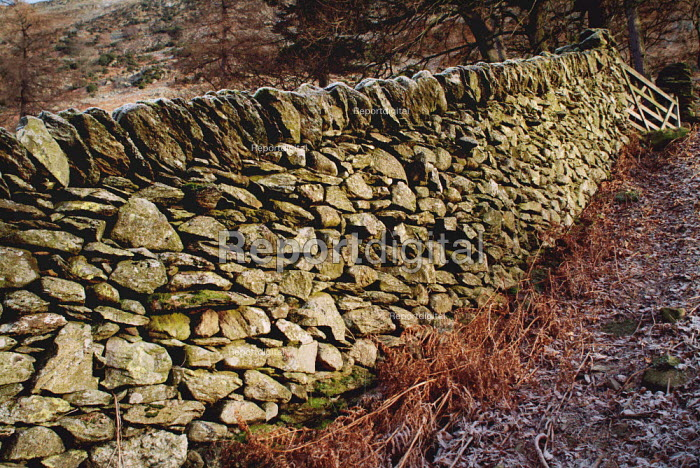 Traditional dry stone wall in the corner of a field, The Lake District. - Paul Carter - 2003-12-30