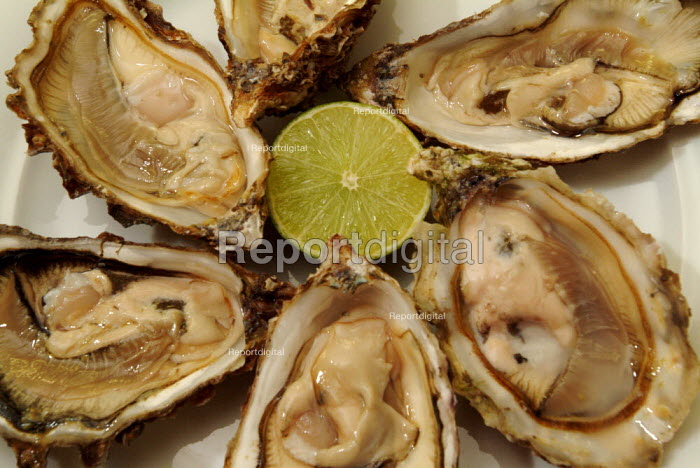 Plate of oysters, ready to be eaten. - Paul Carter - 2004-08-04
