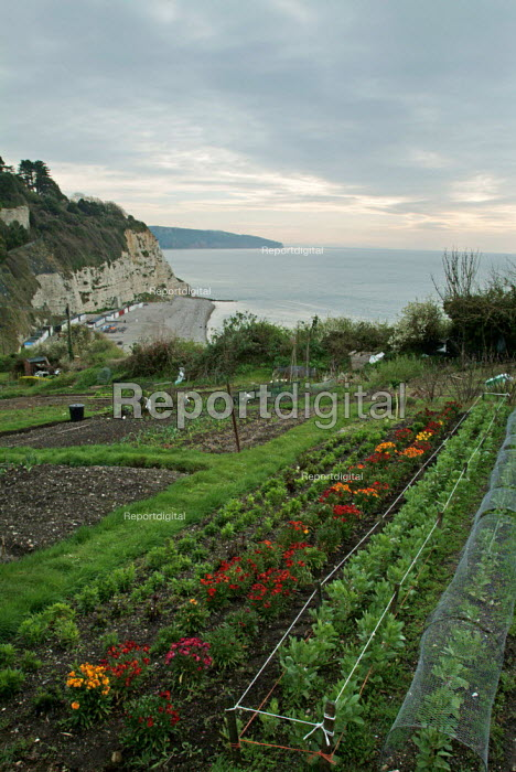Allotments above the sea. Beer, Devon. - Paul Carter - 2004-04-08