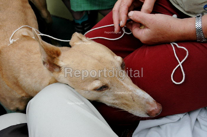 Pet dog travelling on a ferry, patiently waiting to be stroked. - Paul Carter - 2004-08-15