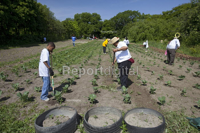Volunteers work at an urban farm in a city park operated by the nonprofit Detroit Black Community Food Security Network (DBCFSN), USA. - Jim West - 2009-06-06