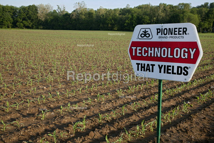A corn crop planted with hybrid seeds marketed by Pioneer Hi-Bred. - Jim West - 2010-05-23