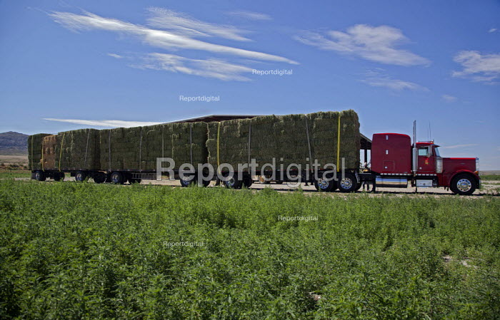 A set of triple trailers loaded with hay bales from a ranch in Nevada USA - Jim West - 2011-07-05