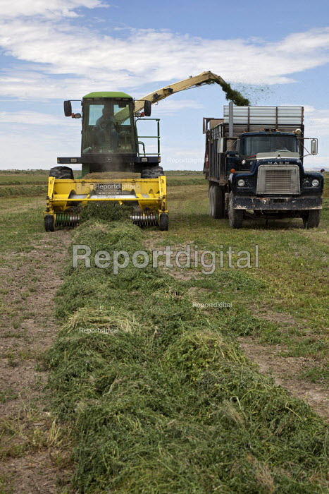 Harvesting alfalfa hay on a Ranch in Nevada, USA - Jim West - 2011-07-06