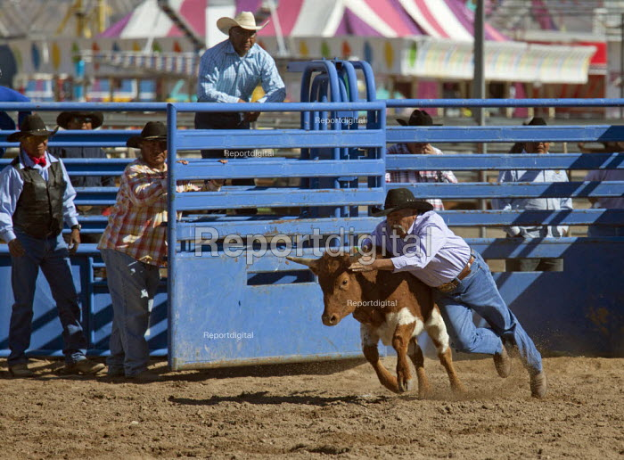 The chute dogging, or steer wrestling, also known as Bulldogging, event in the masters division (Age 40+) of the Native American Tohono O'odham Nation All Indian Rodeo. USA. - Jim West - 2012-02-02