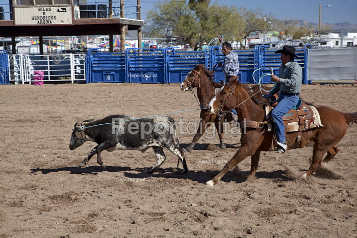 The team roping competition in the Masters division (Age 40+) of the Native American Tohono O'odham Nation All Indian Rodeo. USA. The cowboy must throw a type of rope with a loop, known as a lariat, riata or reata, or lasso, over the head of a calf - Jim West - 2012-02-02