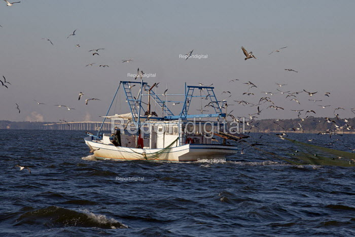 Mobile, Alabama - A shrimp trawler on Mobile Bay. Gulls and pelicans follow the boat to snap up the non-shrimp bycatch that is discarded. - Jim West - 2012-11-08
