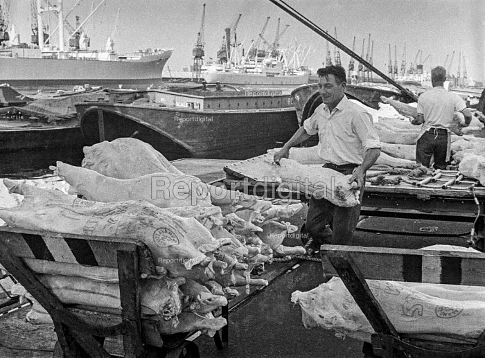 Dock work as it used to be, East India dock, London, before containerisation and just before closure of docks due to containerisation - manhandling frozen New Zealand lamb carcasses piecemeal. - Martin Mayer - 1970-07-06