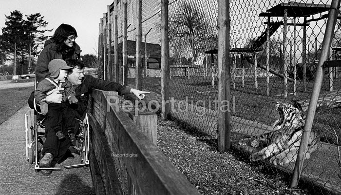 Young family enjoying a day out at the zoo. The father who is in a wheelchair is pointing at a tiger. - Paul Carter - 1993-12-14