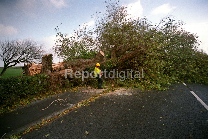 A tree falls on to the road in Clevedon, near Bristol during a storm - Paul Box - 2002-10-27