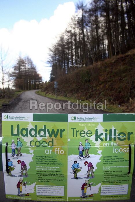 Afan forest, South Wales. Phytophthora ramorum - a devastating fungal pathogen - is causing widespread damage to trees in the UK. It is affecting japanese larch in this area. A warning sign - Paul Box - 2011-02-12