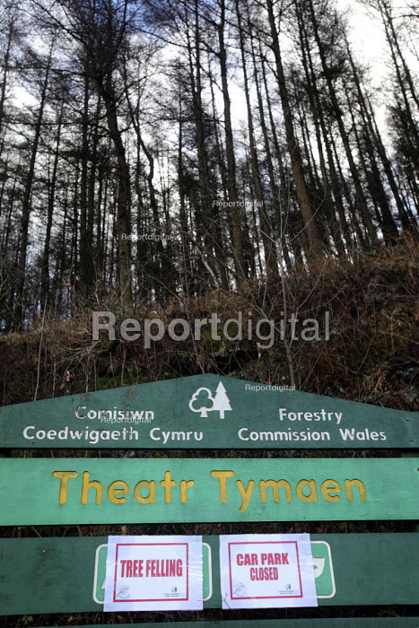 Afan forest, South Wales. Phytophthora ramorum - a devastating fungal pathogen - is causing widespread damage to trees in the UK. It is affecting japanese larch in this area. A sign warning of tree felling and closed car park. - Paul Box - 2011-02-15